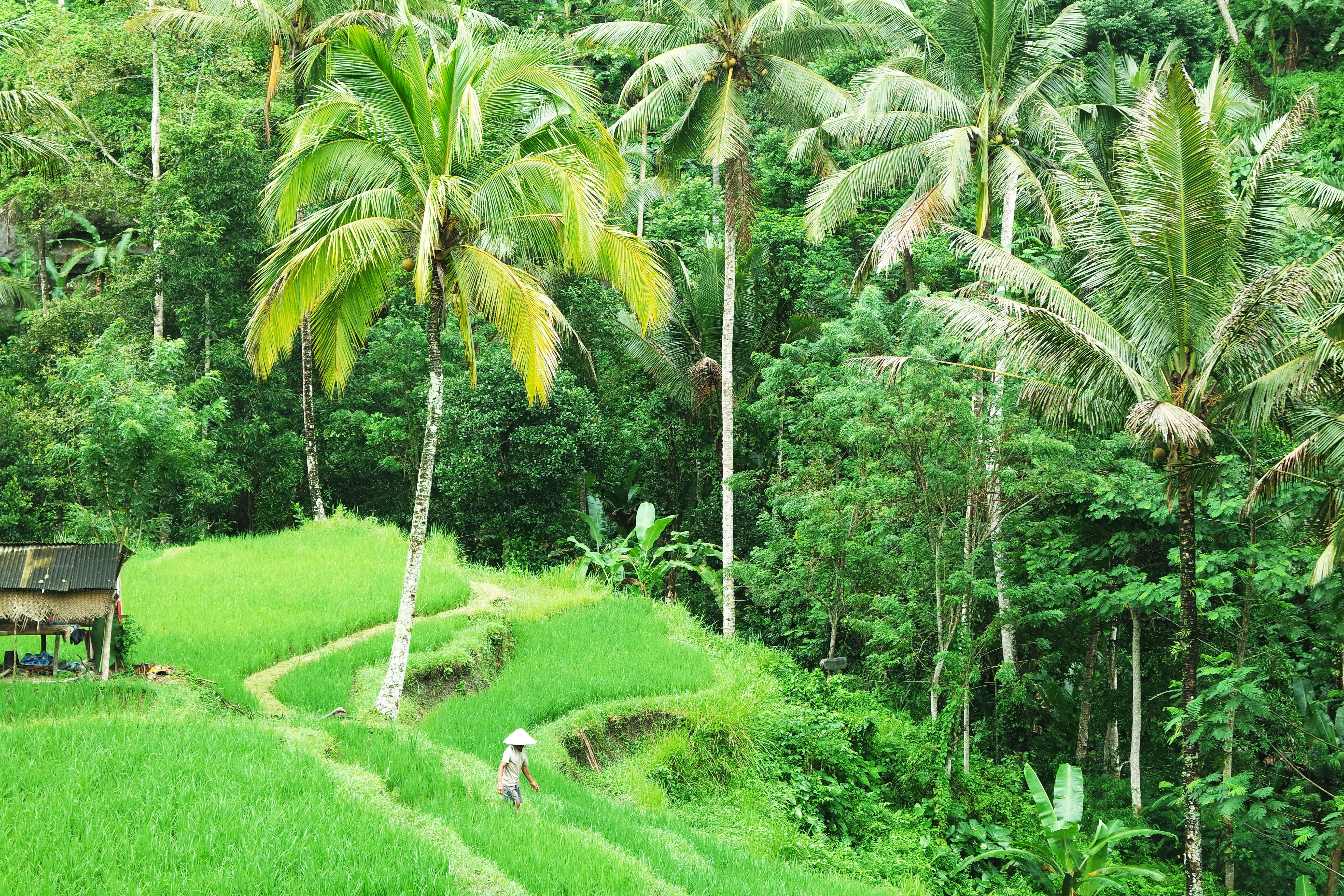 _tour-guidé-ubud-rice-terrasse-best-meilleur-conseil-blog