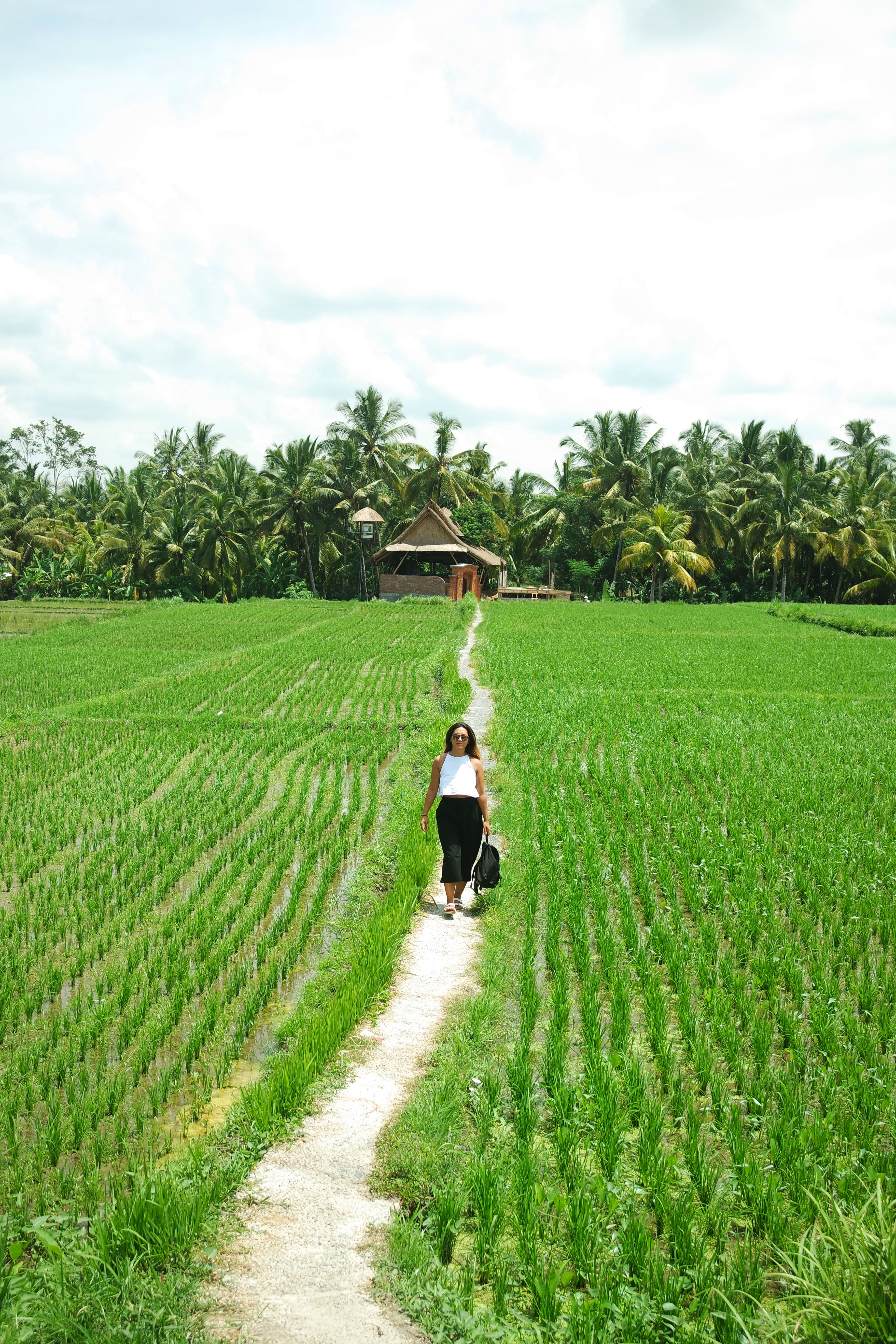 ubud-bali-choss-à-faire-things-to-do-ricefield