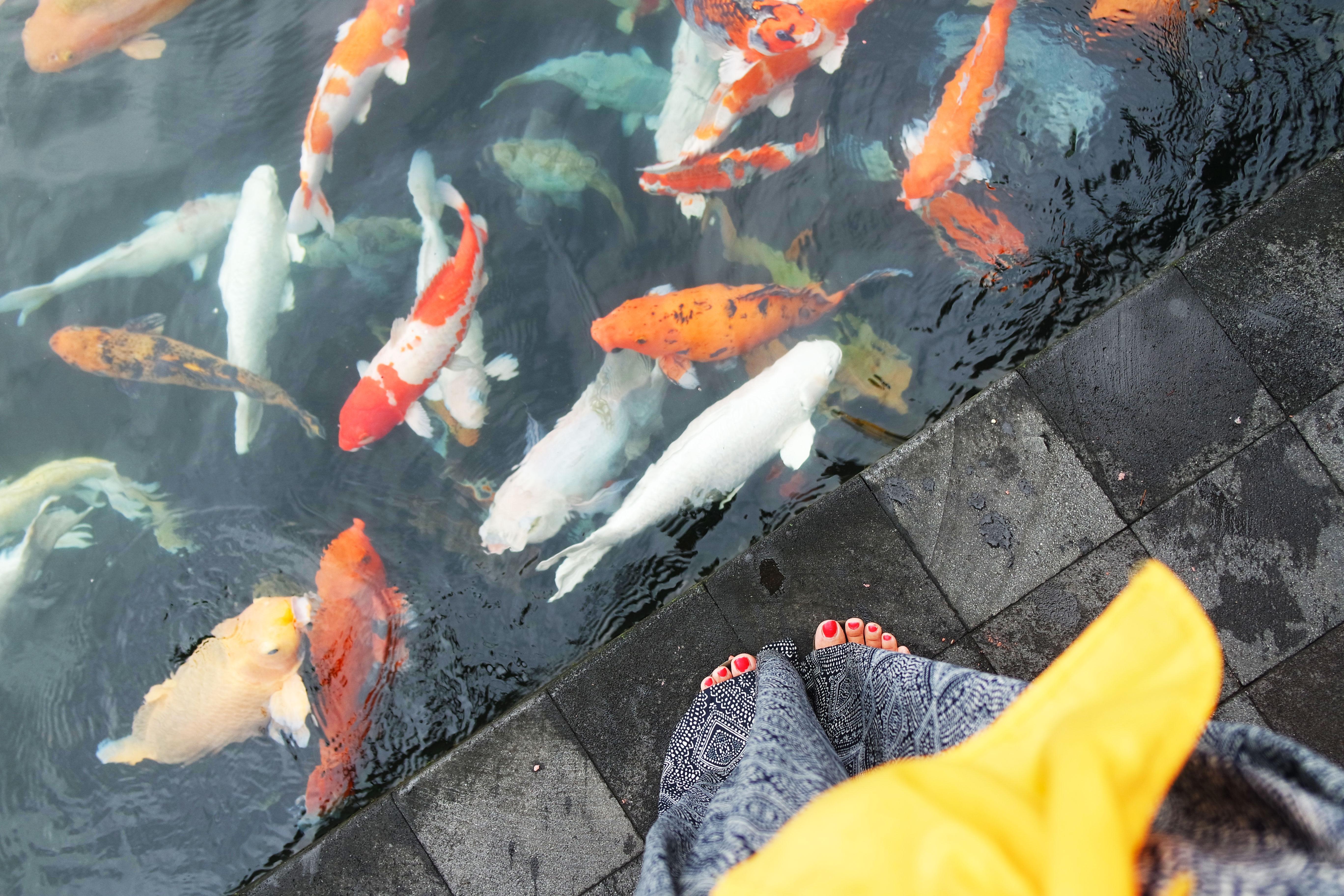ubud-visite-guide-conseils-choses-à-faire-top-blog-voyage