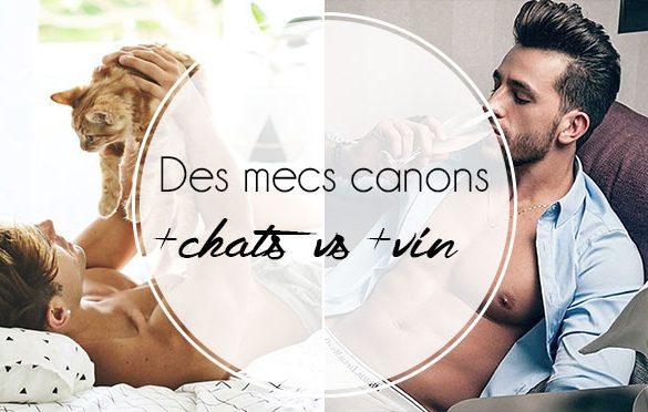 mecs-canons-chats-chaton-vin