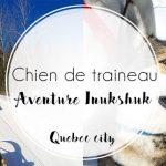 Chien de traineau à Quebec city avec Aventure Inukshuk
