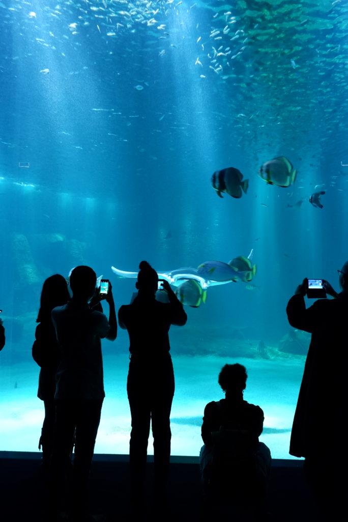 Nausicaa-découverte-visite-boulogne-sur-mer