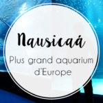 Nausicaá : la visite magique au cœur de l'océan